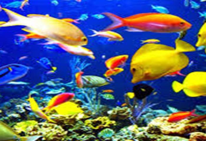 Potensi Pasar Dan Tren Produksi Ikan Hias Indonesia Punya Prospek
